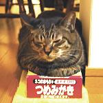 040913_DEtumemigaki.JPG