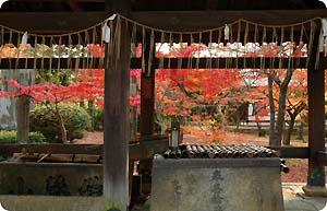 041201TU_kyoto1.JPG