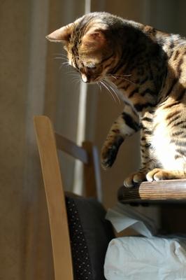 おそろしく行儀の良いネコに成長!