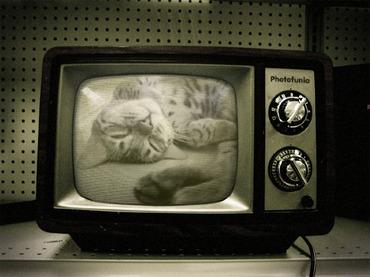ネコがぎっしり詰まったTV。