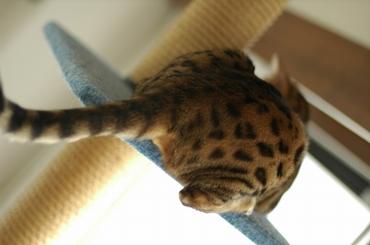 細身の猫タワー…少々手狭。