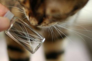 猫ひげコレクション。