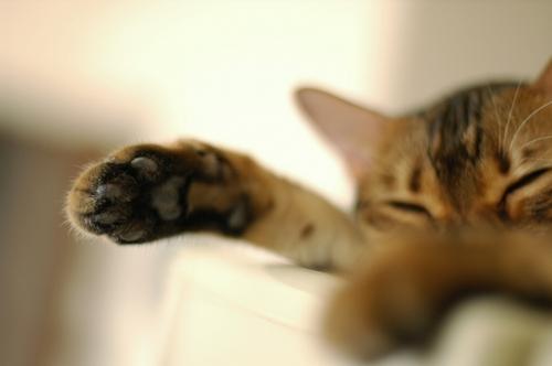 猫の手まだあります…(だれも借りに来ないw)