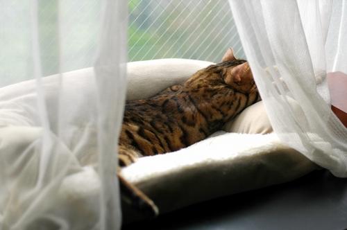 ただのカーテンと ただの猫ベッドが織りなす 妄想コラボレーション。